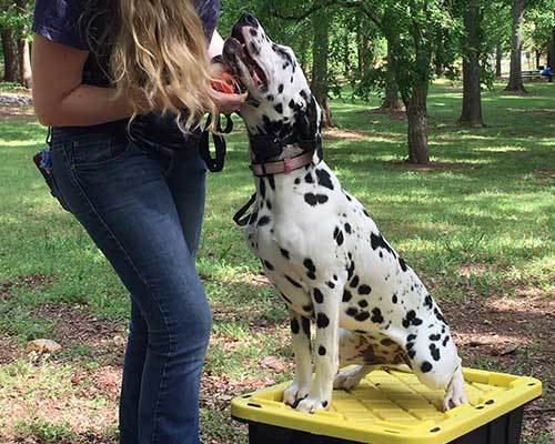Dog-Obedience.jpg